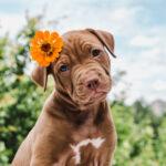 ペット葬儀によく使われる花とは?適さない花についても知っておこう!