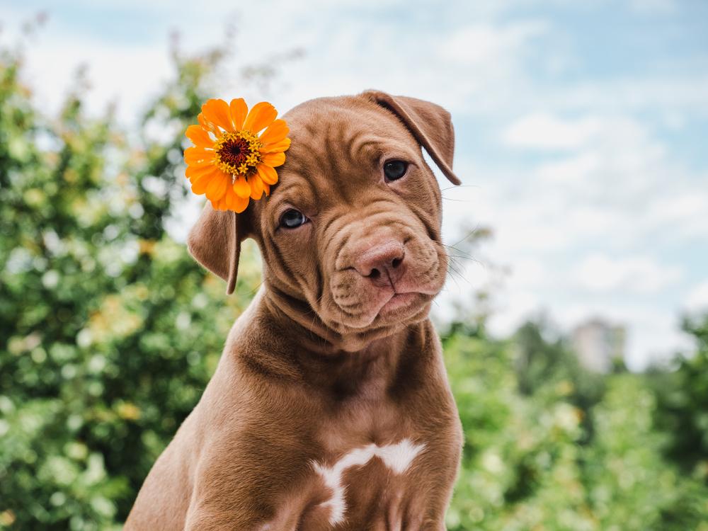 """<span class=""""title"""">ペット葬儀によく使われる花とは?適さない花についても知っておこう!</span>"""